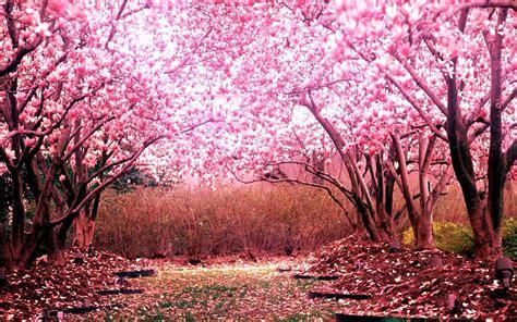 sakura garden menu