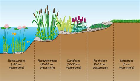 Sumpfzone Teich by Planet Aquafair Grafik Bepflanzung