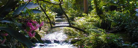 garden falls konoko botanical garden falls excursion ocho rios