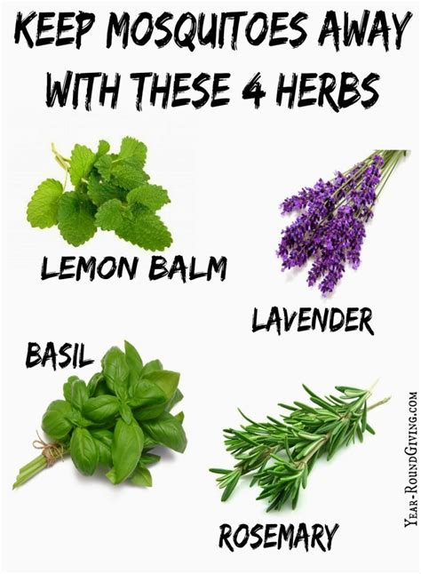 scents to keep mosquitoes away herbs that keep mosquitoes away daily appetite