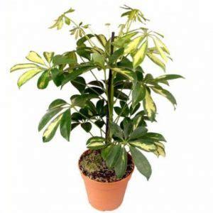 piante mediterranee da vaso 10 piante da balcone sempreverdi