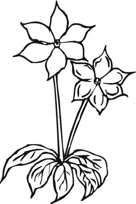 Flower Coloring Pages That You Can Printfree Coloring