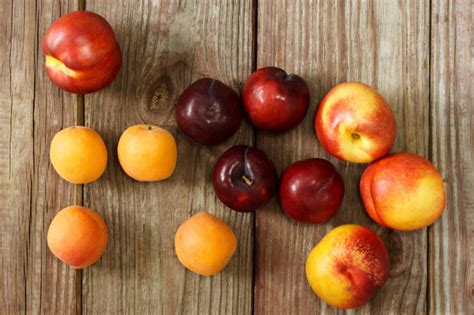 can dogs eat nectarines 17 foods you should never let your pets eat