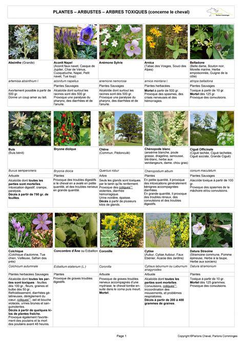 Liste Des Plantes Toxiques Pour Les Poules by Plantes Toxiques Pour Les Poules Daiit