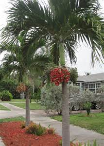 Decorating Palm Trees For Christmas - holiday decorations without the electric bill