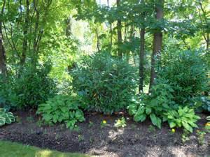 shade tolerant deer resistant plants househoneys com