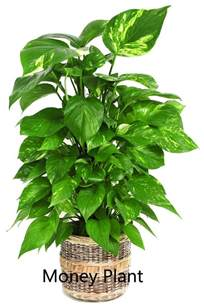plants that don t need natural light 100 plants that don t need sunlight to grow you don