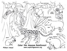 Rainforest Amazon Coloring Page Exploring Nature Educational sketch template