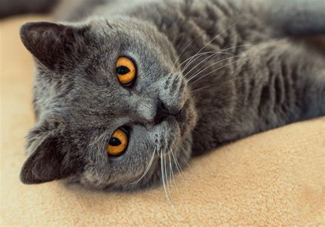 lettiere gatto eliminare cattivi odori dalla lettiera gatto