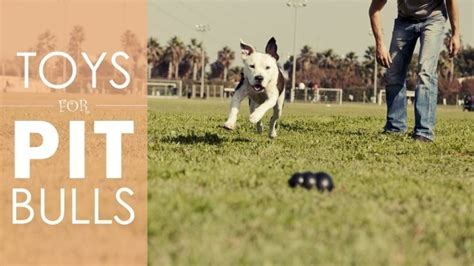 best toys for pitbull puppies the best and worst toys for your pit bull a place for pitbulls