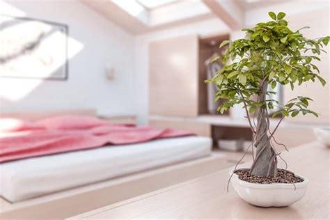 como decorar una sala feng shui c 243 mo decorar un dormitorio seg 250 n el feng shui 6 pasos