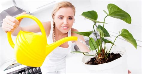 how to take care of a how to take care of your indoor plants on a budget