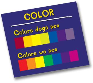 what colors can dogs see colors dogs see 28 images what colors can dogs see pin are dogs color blind 01jpg