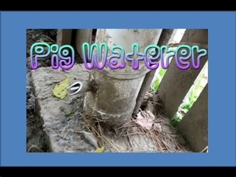 pig waterer youtube