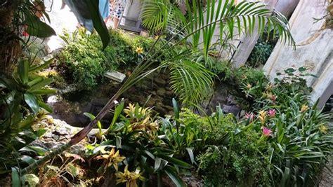 giardini mortella prezzi piante foto di giardini la mortella forio tripadvisor