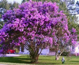 top 5 small tree inspirations outdoortheme com