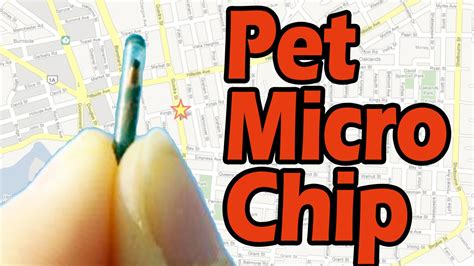 gps chip for dogs gps chips for like the one on dogs reportthenews692 web fc2