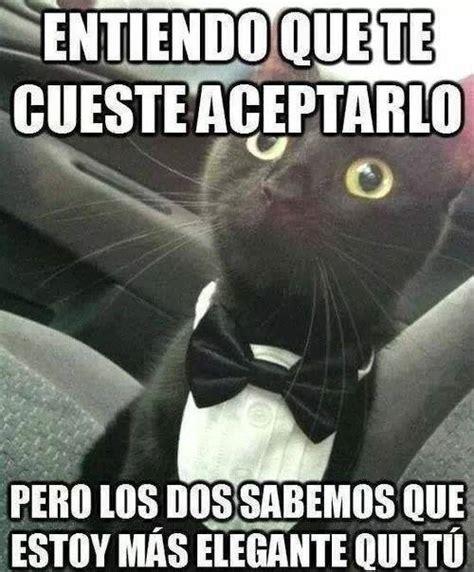 Meme Con - memes gatos buscar con google memes pinterest