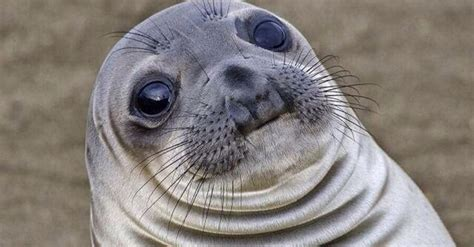 Awkward Seal Meme - meme generator awkward moment seal image memes at