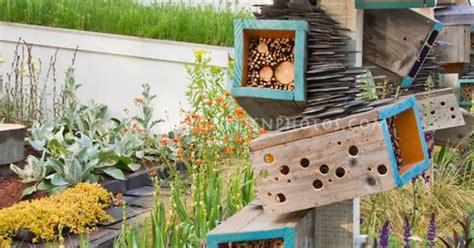 attracting wildlife birds to backyard garden bird house