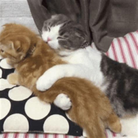 Anime Hug Gif by Couples Hugging Gifs Find On Giphy