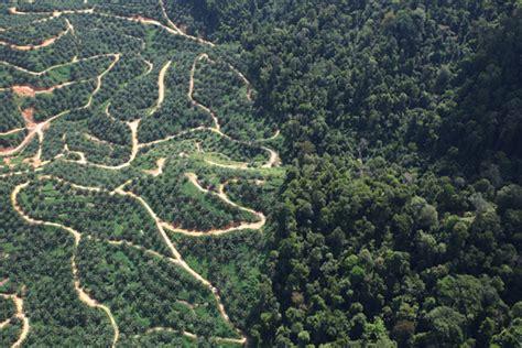 laporan industri kelapa sawit indonesia penuh kejahatan