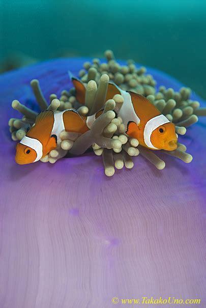 ocean views underwater photography exhibit  smithsonian