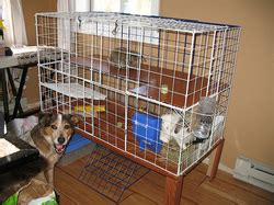 rabbit diy cages budget pets