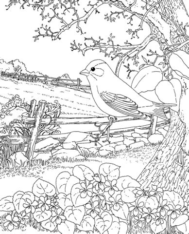 super advanced coloring pages goldfinch and blue violet new jersey state bird coloring