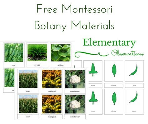 printable montessori materials elementary observations free botany materials