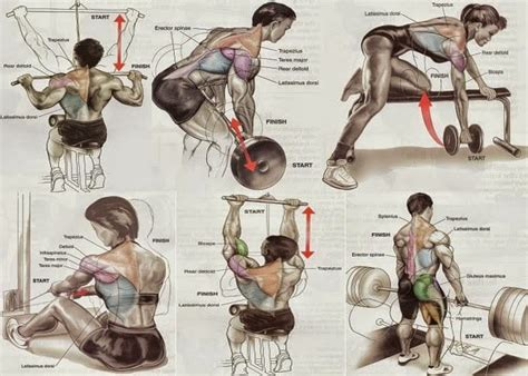 build strengthen outline your back with the back