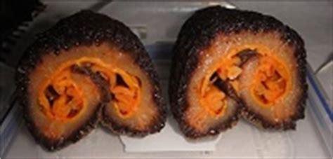 cetriolo di mare cucina oloturia cetriolo di mare