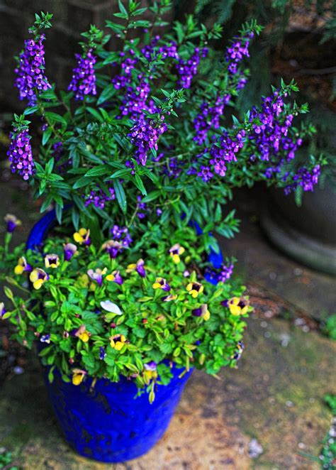 Container Flower Gardening Ideas - shade loving flowers on pinterest sweet potato vines shades and elephant ears