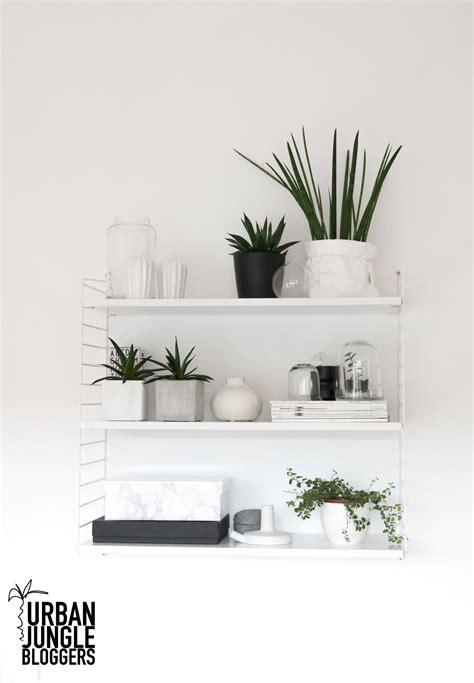 jungle plant shelfie decordots