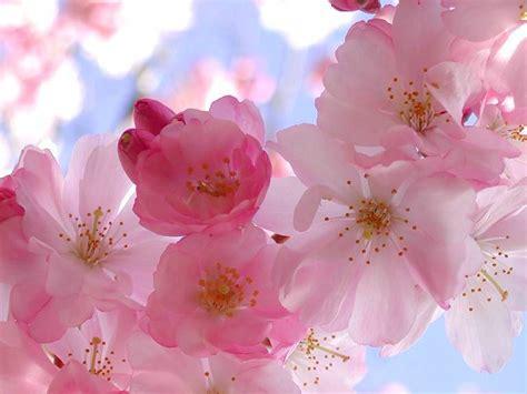 imagenes flores bach terapeuta en flores de bach
