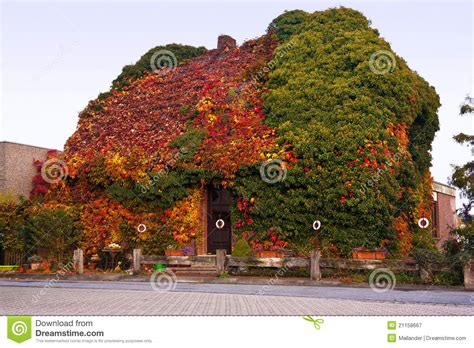 leaf house house under forest leaves stock image image of wild 21158667