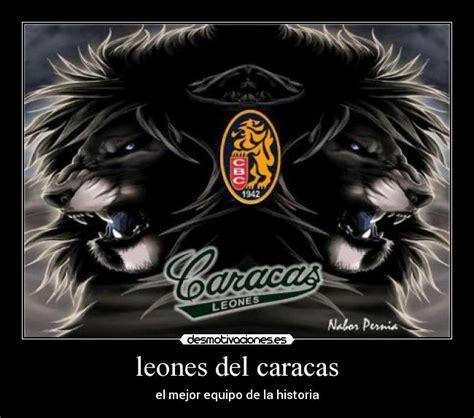 imagenes de los leones del caracas chistosas leones del caracas desmotivaciones