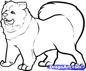 Step 6 how to draw a chow chow chow chow