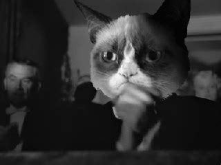 Cat Meme Gif - grumpy cat citizen kane clapping gif find share on giphy