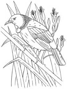 Nests Are Constructed Of Twigs Fine Grasses And Moss Which They Will  sketch template