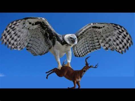 animal planet largest birds of prey in the world best