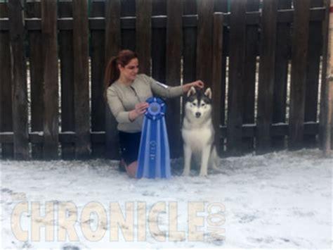 rottweiler club of alaska working club of alaska friday november 4 2016 canine chronicle