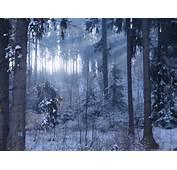 Pics Photos  Peisaj De Primavara Superb Poze Desktop 1680x1050 Wide