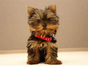 photos cute small puppy