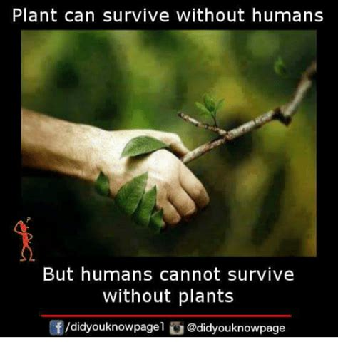 plants that can survive without light plants can survive without sunlight that can survive