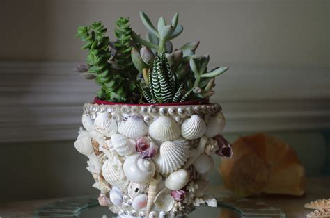 decor flower pot seashell coral and by