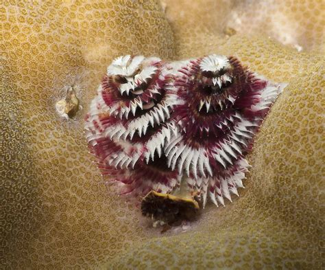 do all puppies worms presents on a coral reef madang ples bilong mi