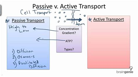 passive transport diagram images for gt active transport and passive transport