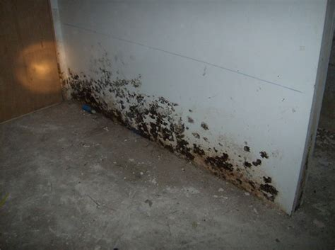 how to get rid of water in basement mold removal