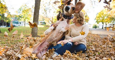 engagement photos with dogs wiener totally photobombs s engagement photos bored panda